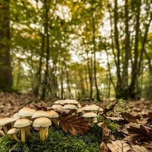 07-11-champignons-pf.jpg