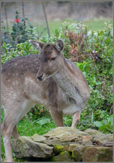 2015 03 01-photo du jour-polani-bambi 2015_0005.JPG