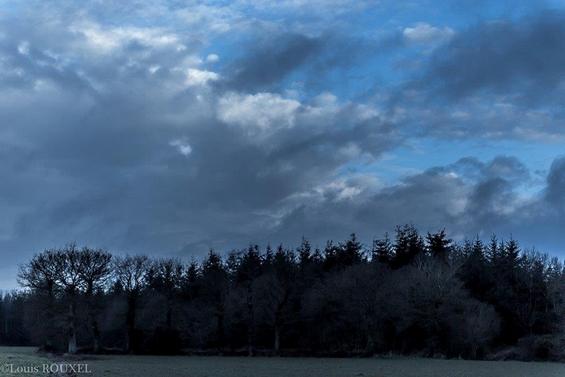 2015 03 22 photo du jour louis-bosquet bleu.jpg