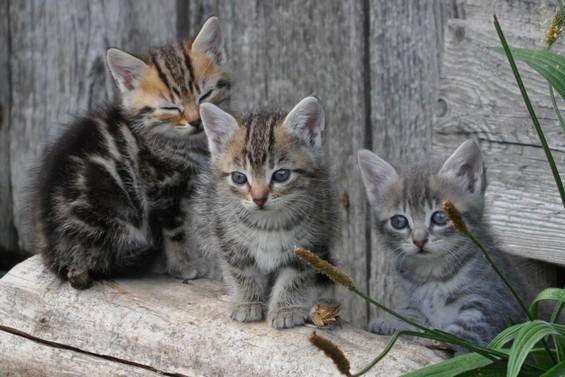 2015 04 24 photo du jour soisick les chatons du champs.JPG