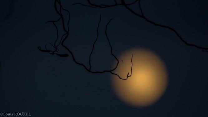 2015 09 14 photo du jour louis Araignée dans la Lune.jpg