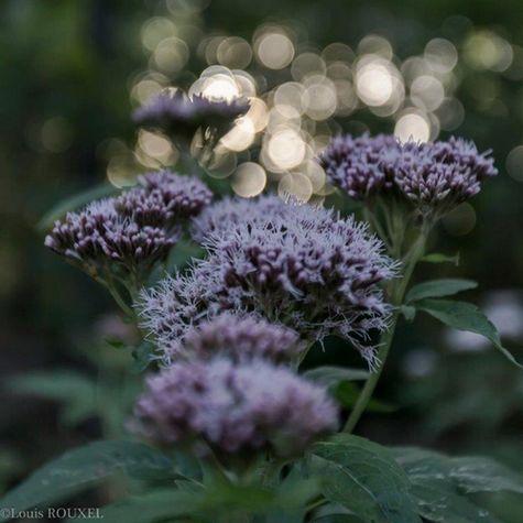 2015 09 20 photo du jour louis Bouquet.jpg