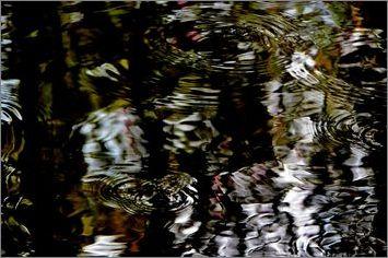 2-pfdes-ronds-dans -l-eau-bayeux-2014_0080.JPG