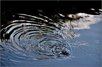 3-pfdes-ronds-dans-l-eau-bayeux-2014_0073.JPG