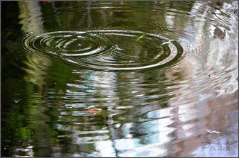 ronds-d-eau2017_01.JPG