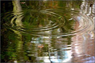 ronds-d-eau2017_02.JPG